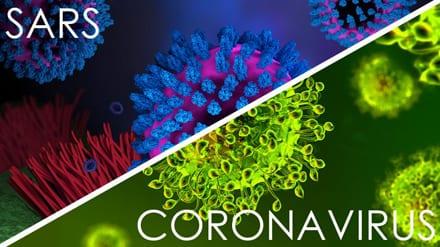 SARS coronaviruses