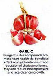 Garlic and uses