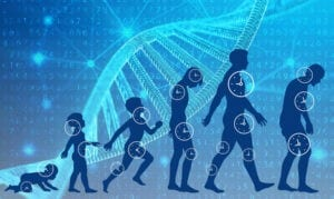Longevity and Genes. Images of age cycle