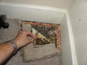 Toxic mold under carpet